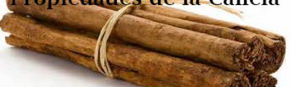 Beneficios y propiedades de la Canela